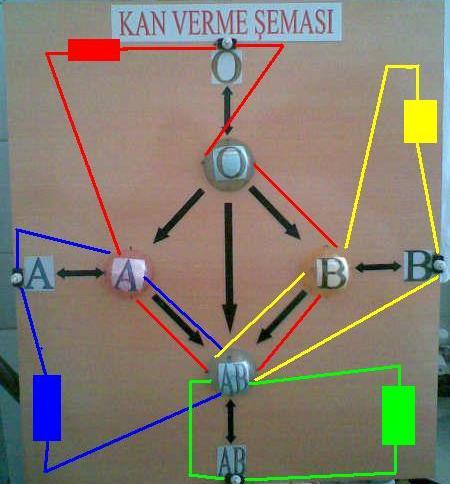 Kan Guruplarının Elektrik Şeması