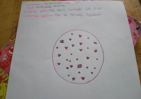 Kan Hücrelerini İnceleme