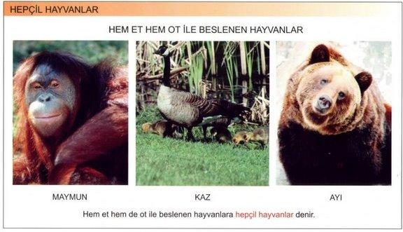Hepçil Hayvanlar