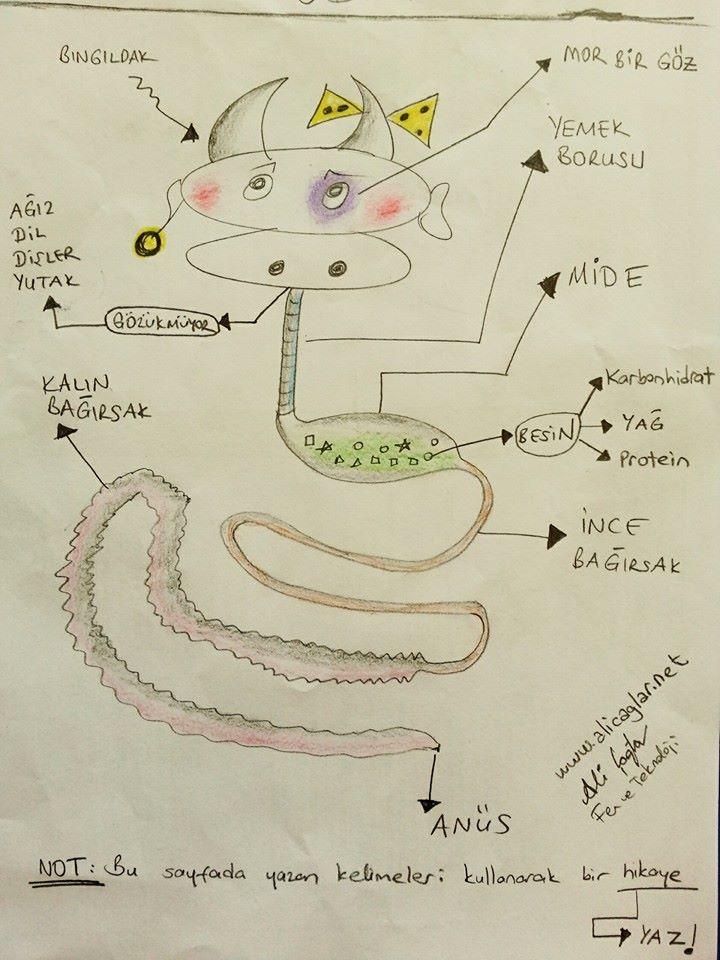 Sindirim sistemi organlari