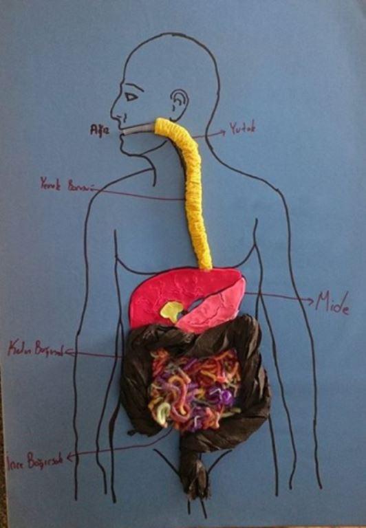 Sindirim sistemi