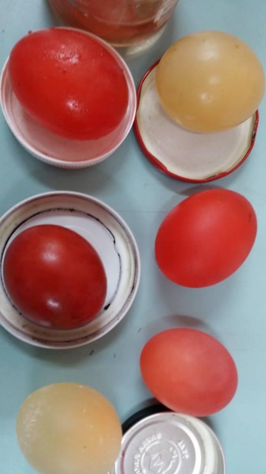 Sirkede bekletilen yumurtalar