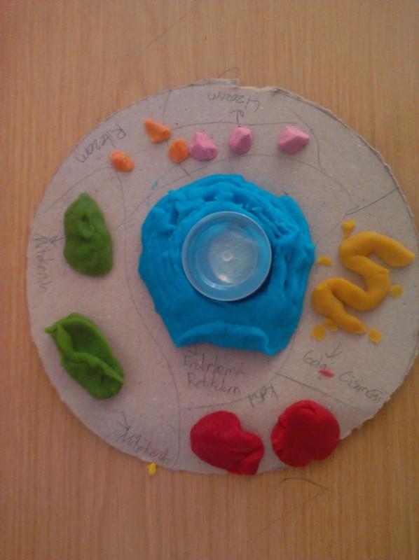 hücre2