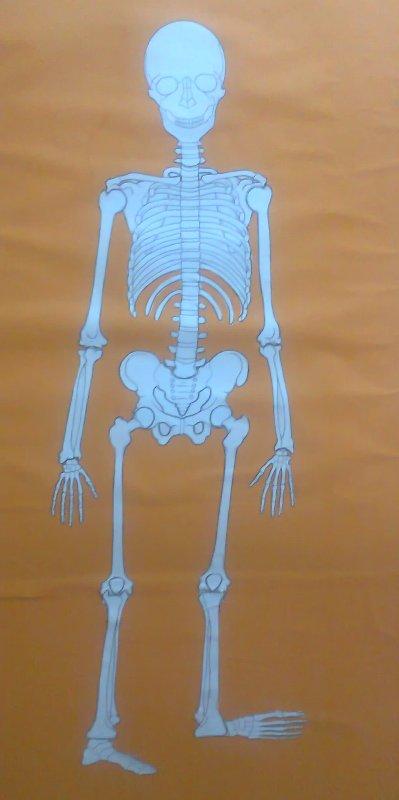 iskeletimiz