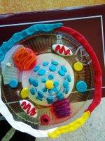 6. Sınıf Hücre Modeli