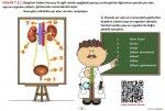 7.Sınıf Boşaltım Sistemi Yapı ve Organları Etkinliği Quar Kodlu Cevap Anahtarlı