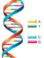 DNA nolekülü
