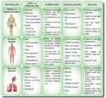 Destek, dolaşım ve solunum sistemi özellikleri