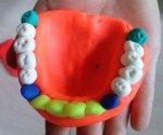 Diş Modeli Gösterimi
