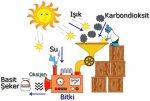 Fotosentez solunum ilişkisi -10