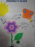 Fotosentez ve solunum 3