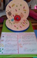 Hayvan Hücre Modeli 3