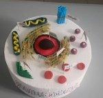 Hücre Modeli Pastası