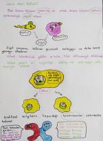Hücre Nasıl Bölünür?
