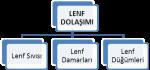 Lenf Sistemi