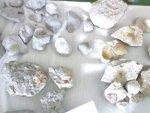 Fosil Resimleri