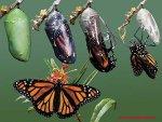 Kelebek de Ba�kala��m Evreleri
