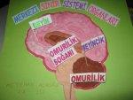 merkezi sinir sistemi organları modeli