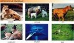 Hayvanlar ve Yavrular�