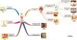 Sindirim Sistemi ve Özellikleri 1