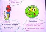 Sperm ve Yumurta hücrelerinin özellikleri