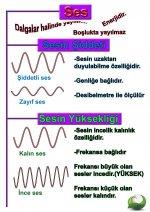 Sesin ozellikleri