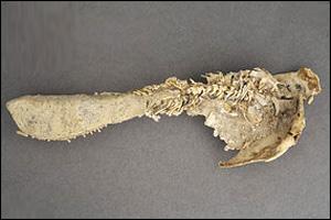 Balıkların anası 380 milyon yaşında