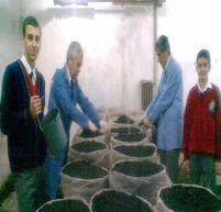 Öğrenciler Okullarında Mantar Yetiştiriciliğini Öğreniyor