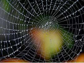 Su tutan yapay örümcek ağı yaptılar