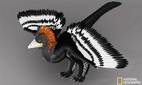 Dinozor ne renkti?