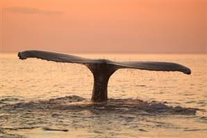 Balinalar da yanar