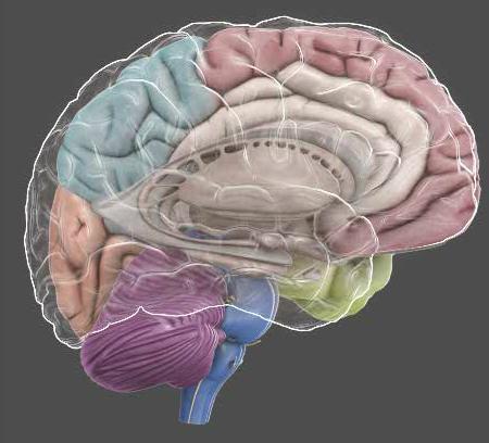 3 Boyutlu Beyin