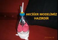 Akciğer modeli Nasıl Yapılır?