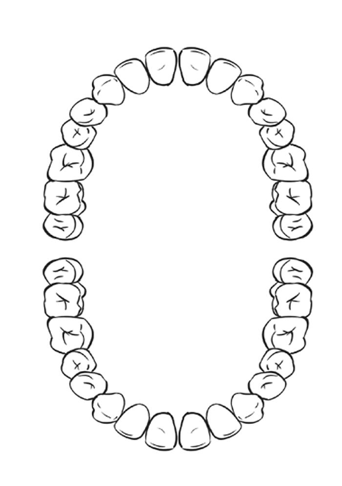 Для ручной, картинка схемы зубов