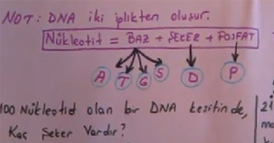 DNA ve �zellikleri B�l�m 4