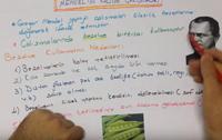 8. SINIF KALITIM - GENETİK 2