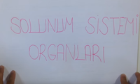 6. SINIF SOLUNUM SİSTEMİ 2