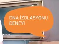 DNA İZOLASYONU DENEYİ